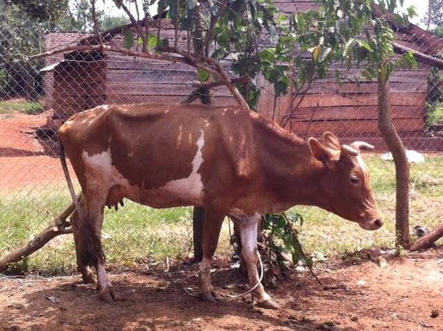UgandaFeb14-4